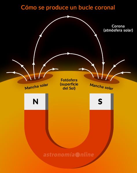 Las manchas solares suelen aparecer en pares, que poseen polaridades manéticas opuestas. Si pudiéramos enterrar un gigantesco imán de herradura bajo la superficie del Sol, produciría un campo magnético muy similar al generado por un par de manchas solares, generando los denominados bucles coronales. Se trata de estructuras que emergen de la fotósfera siguiendo las líneas del campo magnético solar, y regresan hacia la superficie solar conectando las polaridades magnéticas opuestas de dos manchas solares. Estas regiones activas llegan a tener tamaños que superan en 30 veces el diámetro de la Tierra, y desempeñan un papel fundamental en la dinámica y el calentamiento coronal.